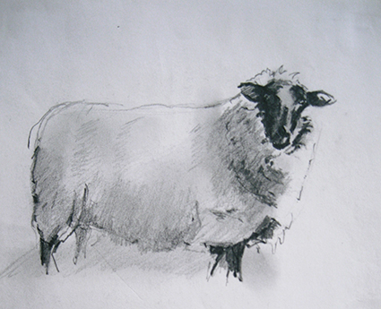 Animal_Sheep_sketch